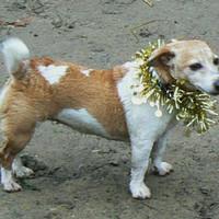 Tinsel Dog